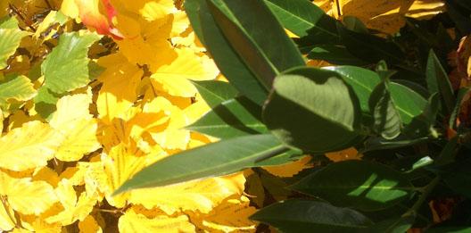 natuur geeft aanwijzingen wat voor jaargetijden het is