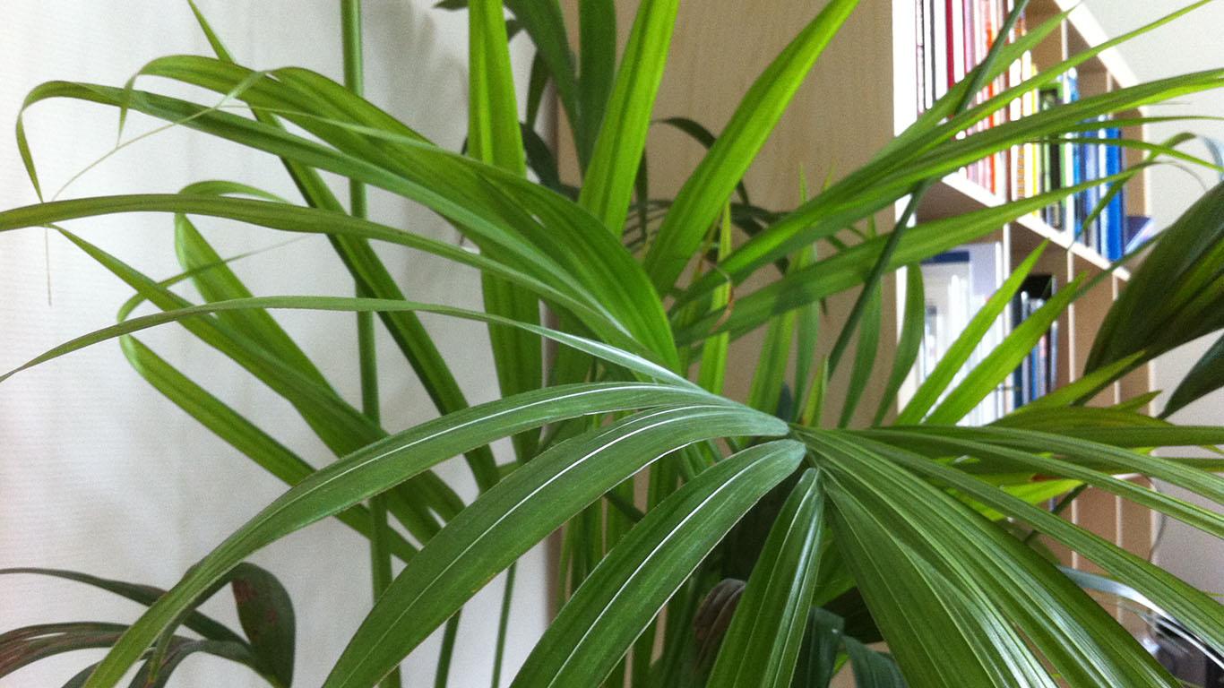 Planten Op Kantoor : Helpen planten op kantoor ons ontspannen