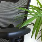 planten op kantoor kunnen stress helpen reduceren