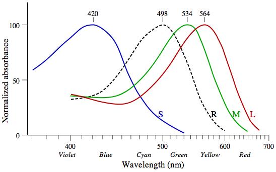 Plaatje golflengtes kegeltjes en staafjes - voor iedere soort receptor is aangegeven wat de maximale hoeveelheid energie is deze kan absorberen voor licht met een bepaalde golflengte. Deze energie is 'genormaliseerd', dat betekend dat je het moet zien als een percentage, niet als een absoluut getal. De kegeltjes zijn aangegeven met S, M & L. Dit staat voor small, medium and long wavelength cones. De staafjes zijn met R aangegeven. Dit staat voor rods.