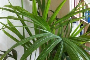 planten kantoor ontspanning